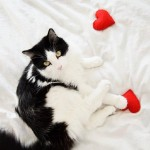 7 Purrfect DIY Cat Toys