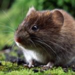 How to Remove Mice and Stop Them from Coming Back